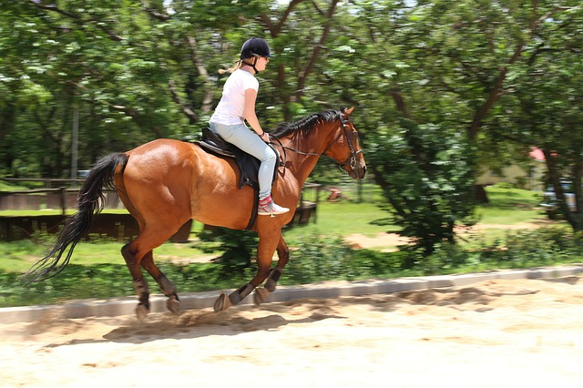horsebackriding in the Watchung Reservation