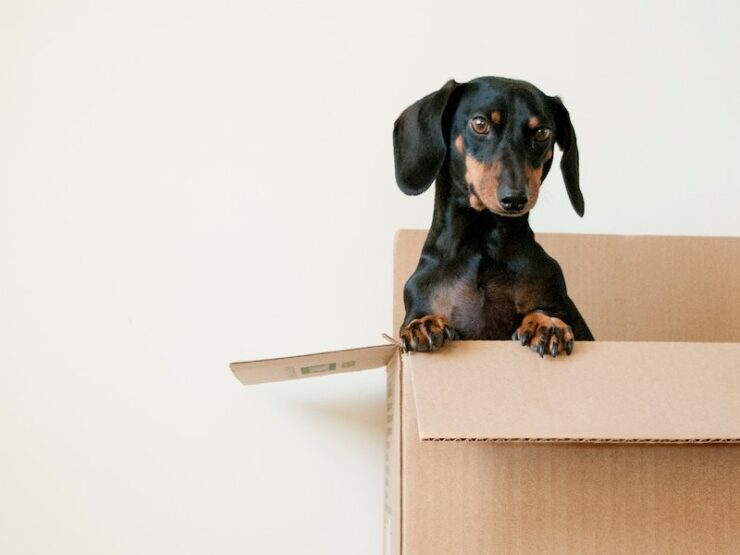 Selling Your Home: 4 Downsizing Tips